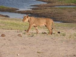 Africa 318